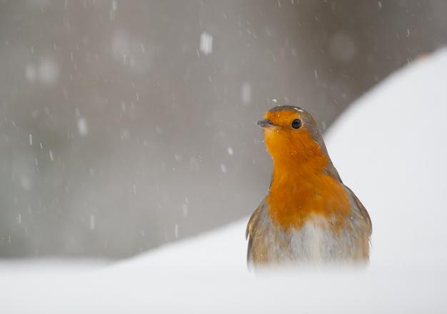 sneeuw op ramen